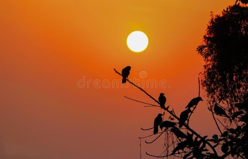 Por do sol com pássaros imagens de stock royalty free