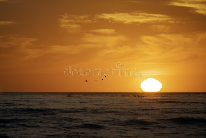 Por do sol com pássaros e remadores fotografia de stock