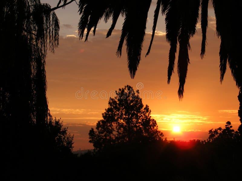 Por do sol com a palma e as outras árvores nenhumas 2 fotografia de stock royalty free