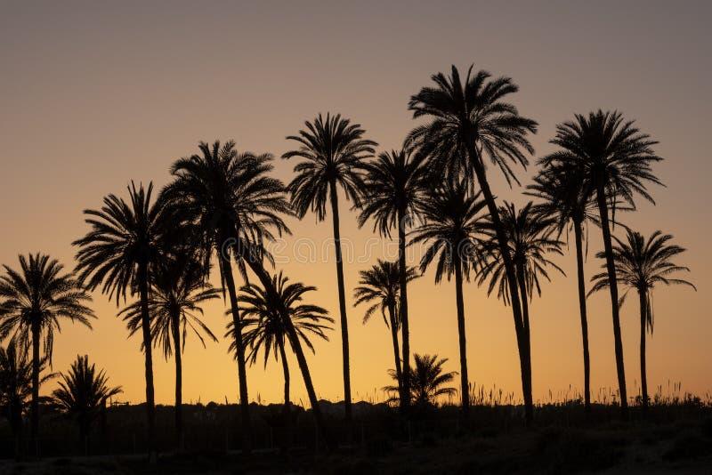 Por do sol com palmeira fotografia de stock royalty free