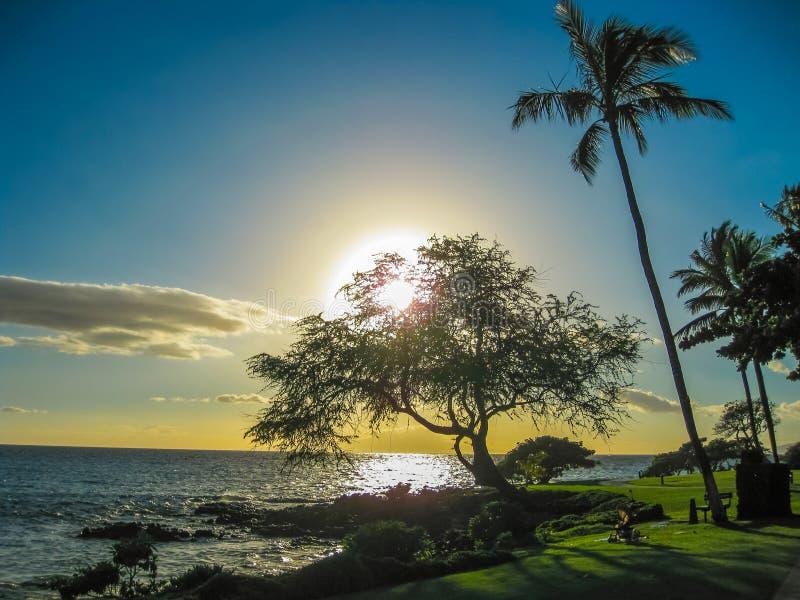 por do sol com palmeiras, ilha de Maui, Havaí imagens de stock royalty free