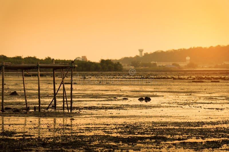 Por do sol com pantanal fotos de stock royalty free