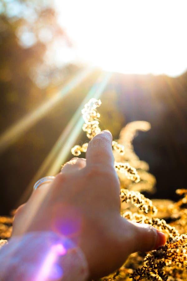 Por do sol com plantas fotos de stock royalty free