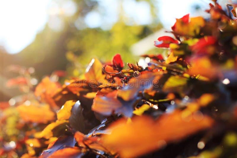 Por do sol com plantas fotografia de stock