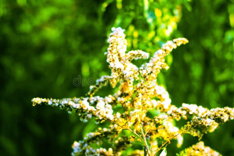 Por do sol com plantas imagem de stock royalty free
