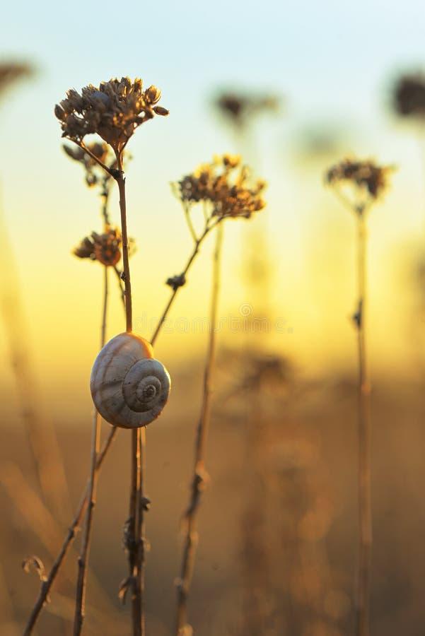 Por do sol com shell do caracol foto de stock
