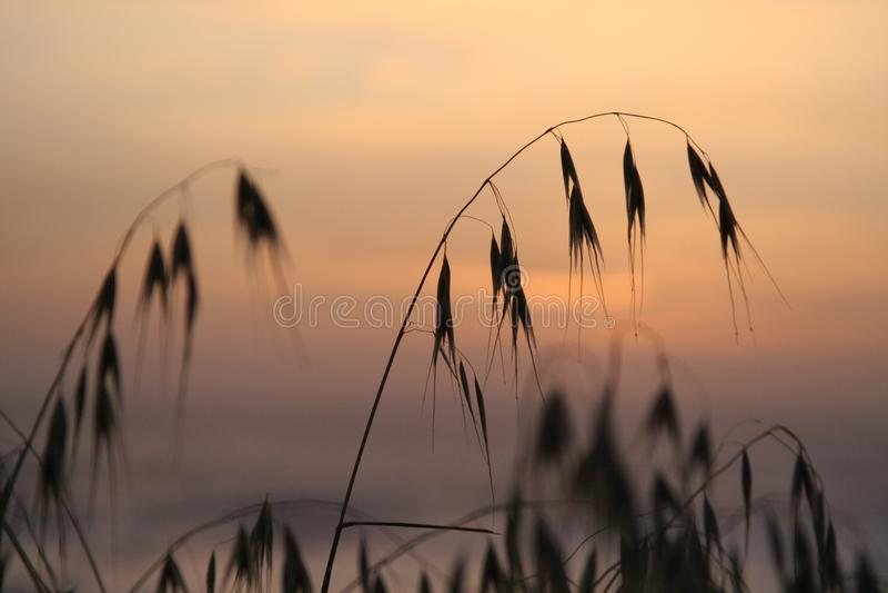 Por do sol com vegetação imagens de stock