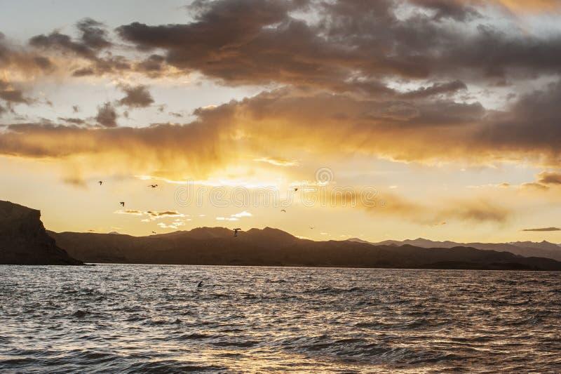 Por do sol com voo dos pássaros foto de stock