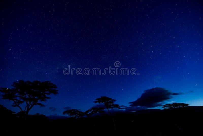 Por do sol combinado com as estrelas e as árvores fotos de stock royalty free