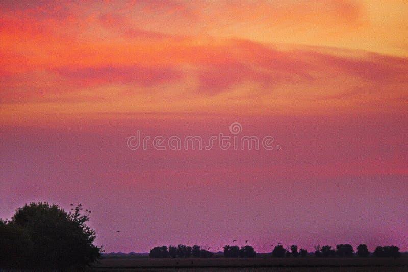 Por do sol cor-de-rosa bonito da noite em um fundo de um campo com grandes árvores de folhas mortas imagens de stock