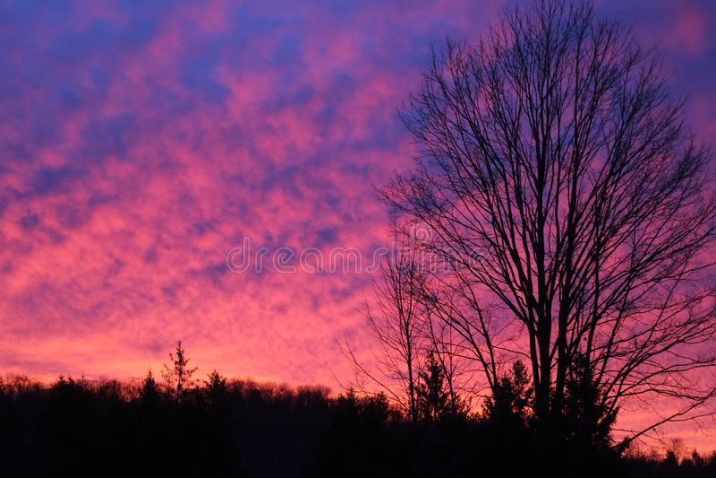 Por do sol cor-de-rosa de néon imagens de stock royalty free