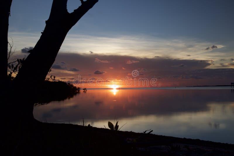Por do sol cor-de-rosa que reflete na água nas madeiras foto de stock royalty free