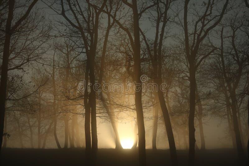 Por do sol crepuscular entre dois troncos das árvores fotografia de stock