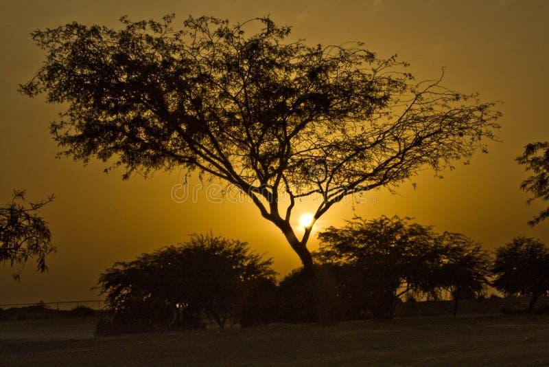Por do sol da árvore fotografia de stock