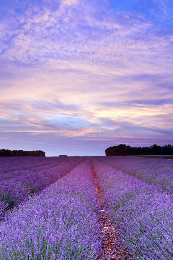 Por do sol da alfazema de Provence imagens de stock royalty free