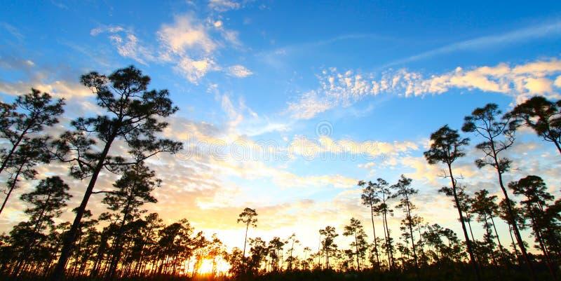 Por do sol da floresta dos marismas imagem de stock