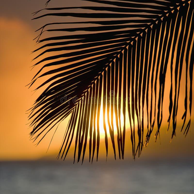 Por do sol da fronda da palma. fotos de stock