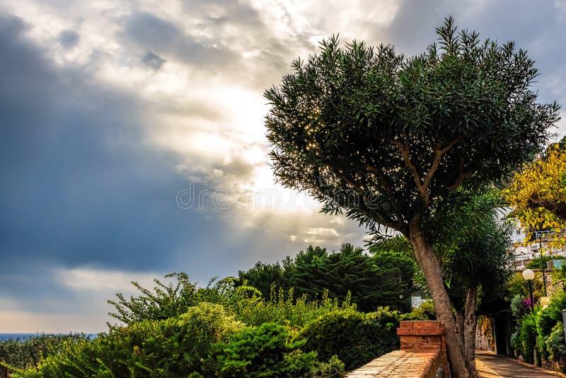 Por do sol da ilha de Capri atrás de uma árvore com nuvens dispersadas imagens de stock royalty free