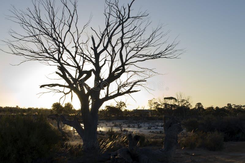 Por do sol da mola sobre a mágica do lago, Hyden, WA, Austrália fotografia de stock