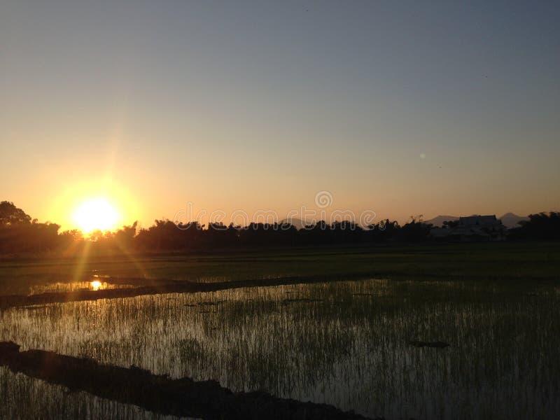 Por do sol da noite campo de milho almofada campo no dezembro de 2016 Tailândia #007 foto de stock royalty free
