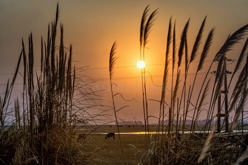 Por do sol da paisagem em Argentina fotografia de stock