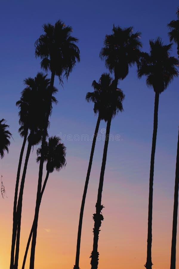 Por do sol da palmeira de Califórnia imagens de stock royalty free