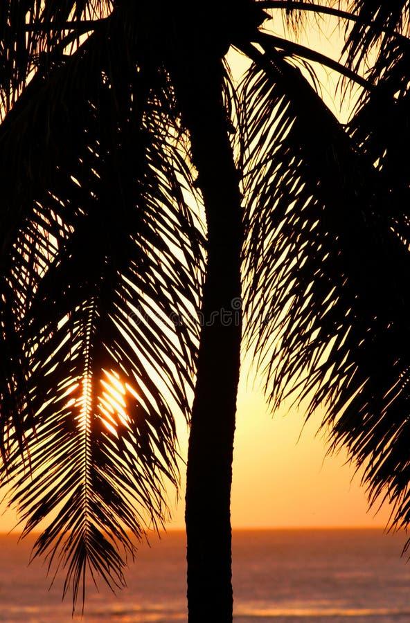 Por do sol da palmeira em Honolulu, Havaí fotos de stock royalty free
