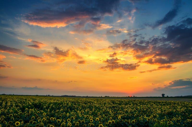 Por do sol das cores fotografia de stock