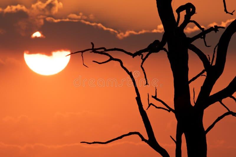 Por do sol de África foto de stock