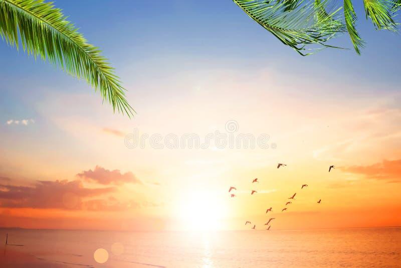 Por do sol de Art Beautiful sobre a praia tropical fotografia de stock