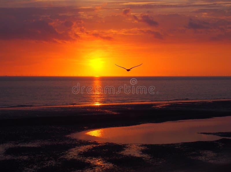 Por do sol de incandescência dourado bonito que reflete em um mar calmo com as nuvens dramáticas coloridas e uma gaivota que voa  fotos de stock