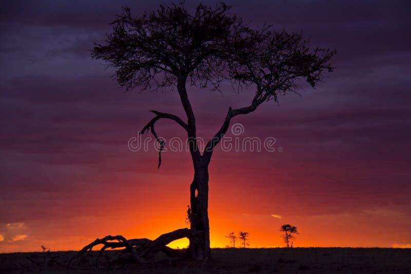 Por do sol de mara do Masai foto de stock royalty free