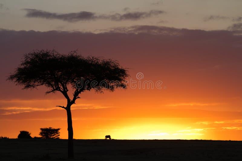 Por do sol de mara do Masai fotografia de stock royalty free