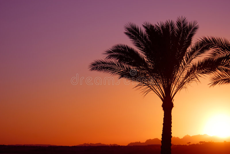 Por do sol de Palmtree fotos de stock royalty free
