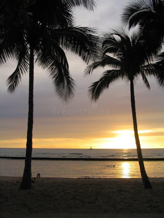Download Por do sol de Waikiki imagem de stock. Imagem de árvores - 113539