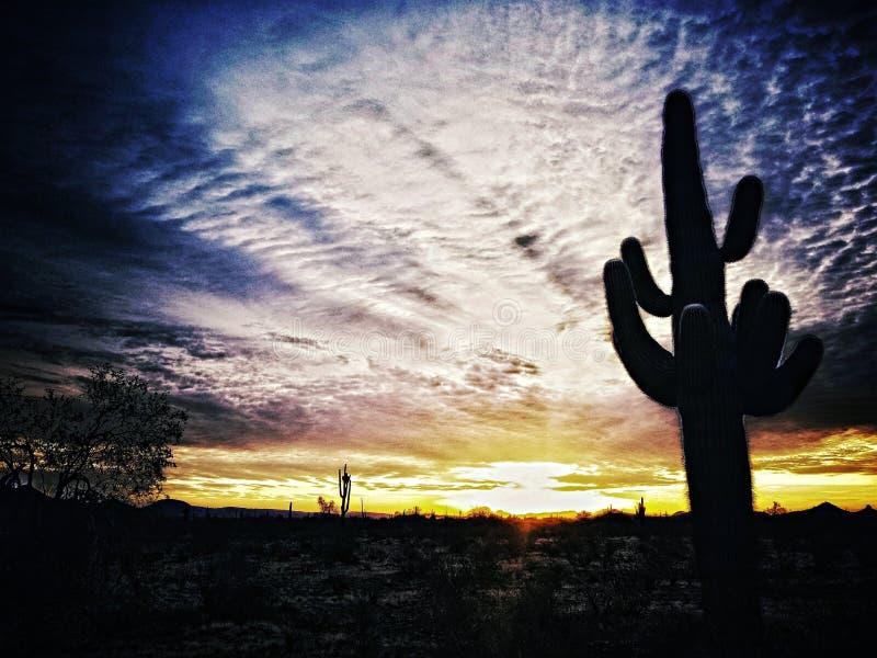 Por do sol do deserto imagem de stock royalty free