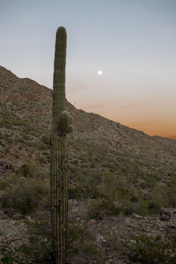 Por do sol do deserto de Sonoran foto de stock royalty free