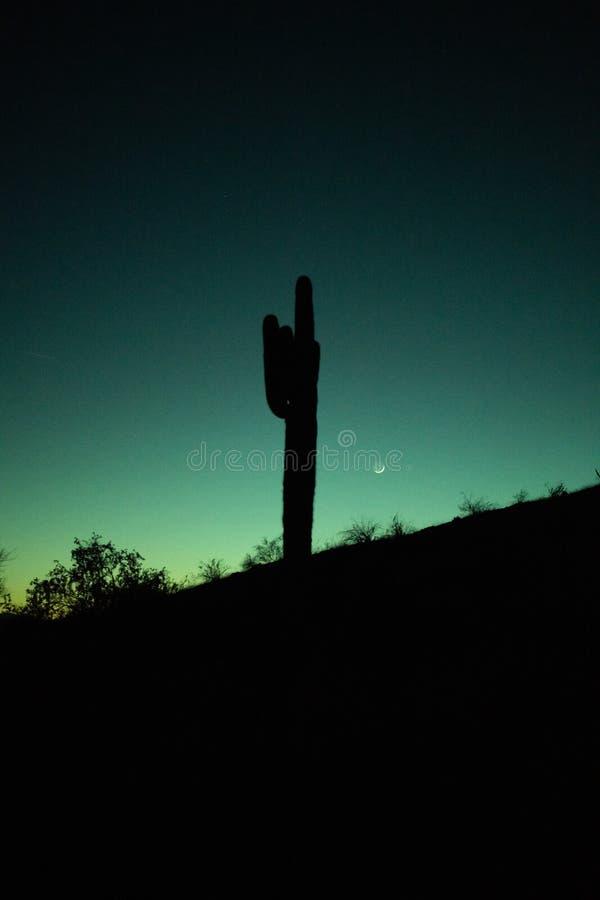 Por do sol do deserto de Sonoran fotografia de stock royalty free