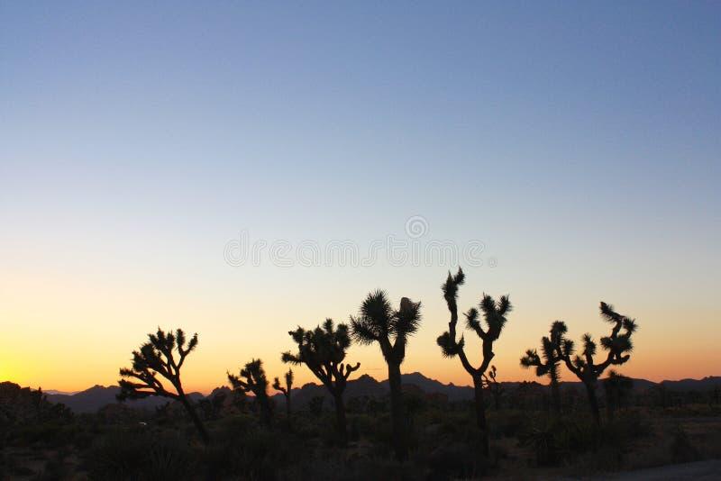 Por do sol Desertscape imagem de stock