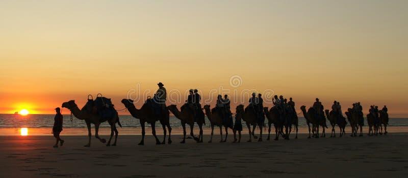 Por do sol do camelo de Broome fotografia de stock