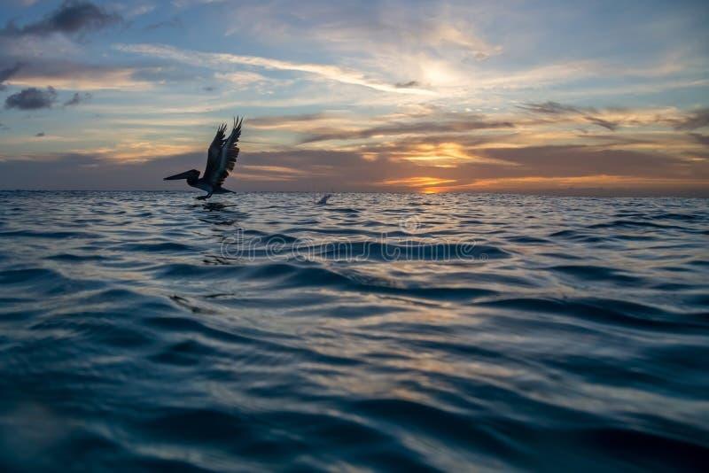 Por do sol do Cararibe fotografia de stock