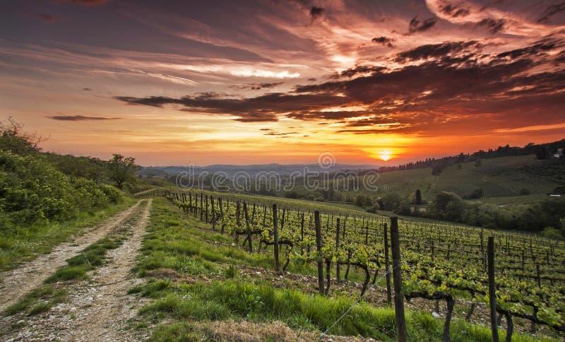 Por do sol do Chianti fotografia de stock royalty free