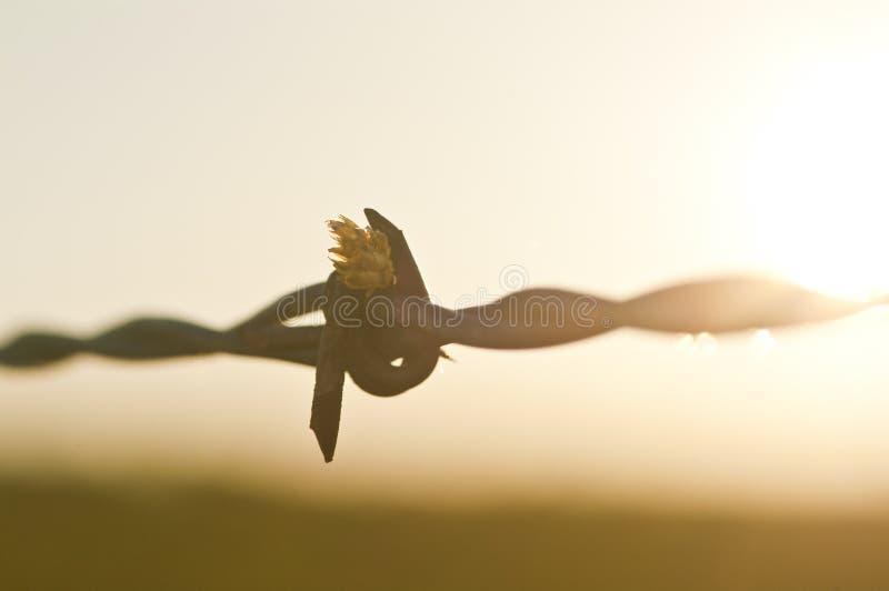 Por do sol do close up do fio de Barb imagens de stock royalty free