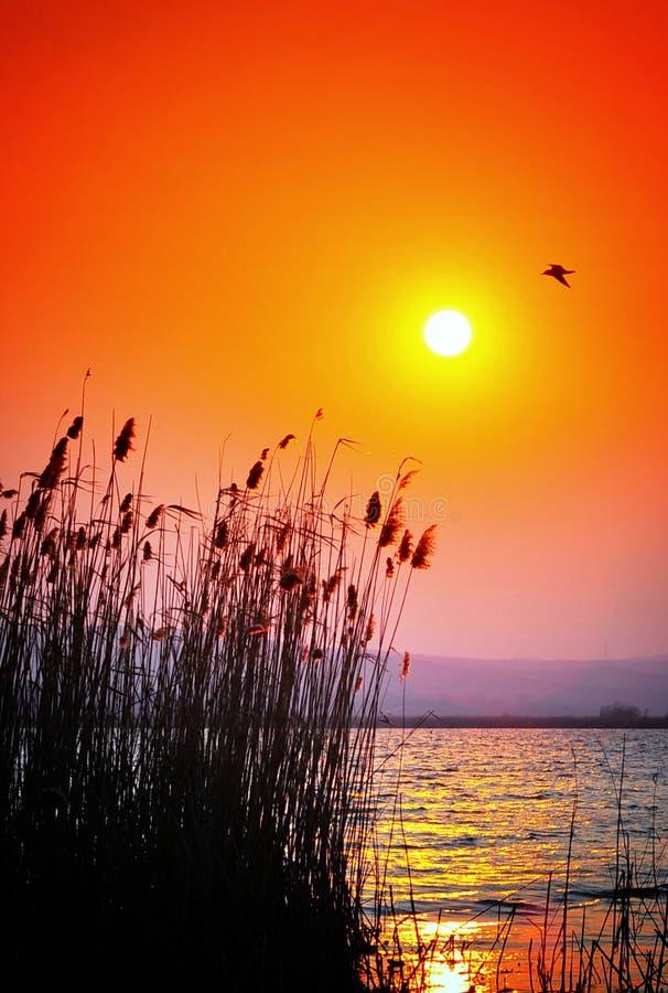 Por do sol do delta de Danúbio foto de stock