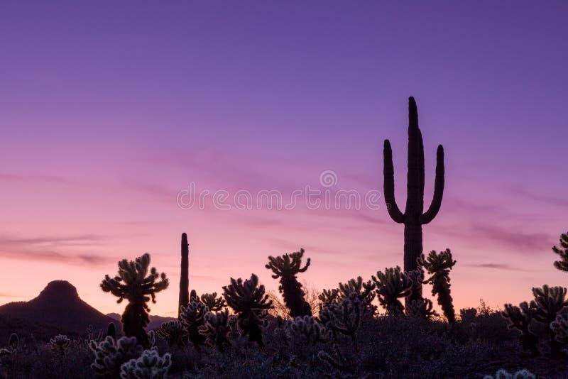 Por do sol do deserto do Arizona foto de stock