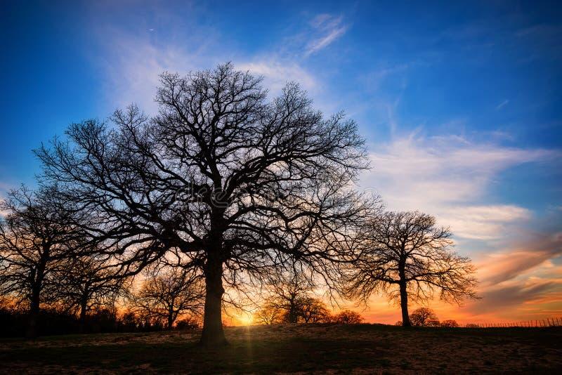 Por do sol do inverno de Texas foto de stock