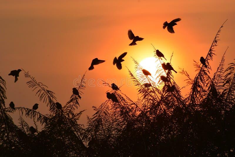 Por do sol do pássaro ilustração royalty free