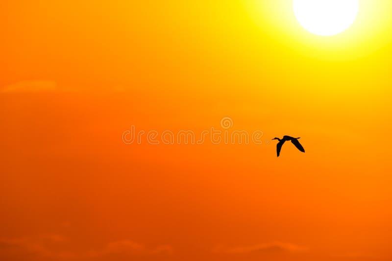 Por do sol do pássaro foto de stock
