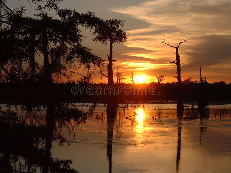 Por do sol do pântano imagens de stock