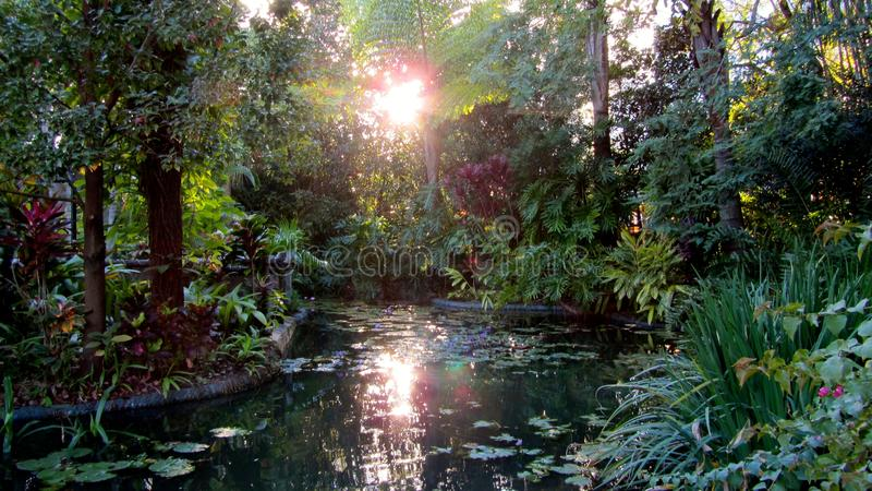 Por do sol do parque de Florida Orlando sob a água imagem de stock royalty free